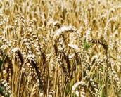 Politiek overweegt oprichting ministerie van Voedsel
