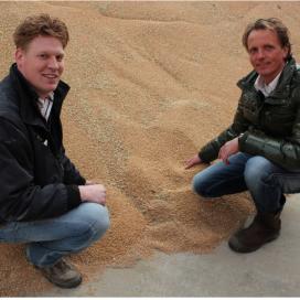 Eerste lokaal geteelde tarwe binnen bij Koopmans