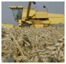 Graanprijzen blijven stijgen