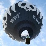 Noordpoolbollenactie Zeelandia afgetrapt met ballonvaart