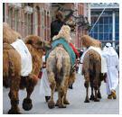 Bonbon van kamelenmelk gelanceerd