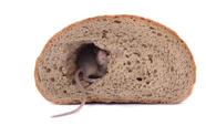 Klant bakker vindt muis in brood