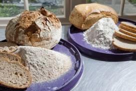 Brood positieve uitzondering zoutcampagne