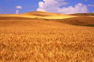 Voedselgrondstoffen worden schaars
