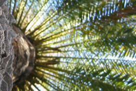 Royal Steensma haalt certificering voor verwerking duurzame palmolie