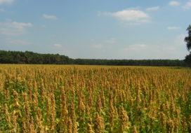 Dutch Quinoa Group groeit verder